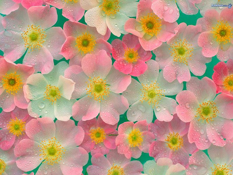 обои на рабочий стол цветы и камни