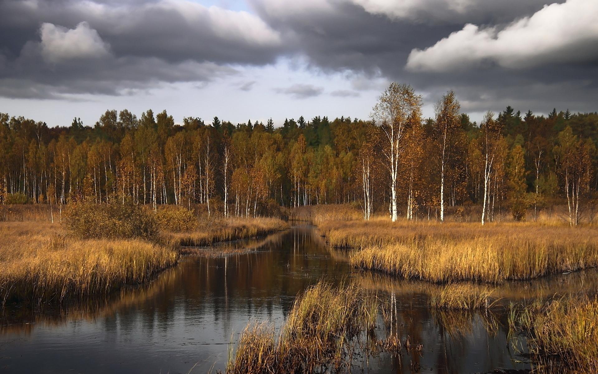 Фото красивый лес московской области 6