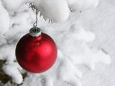 На фоне белого снега